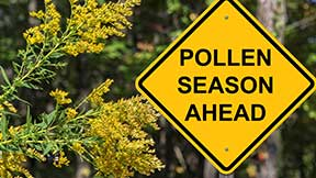 Prevent pollen from taking over your home